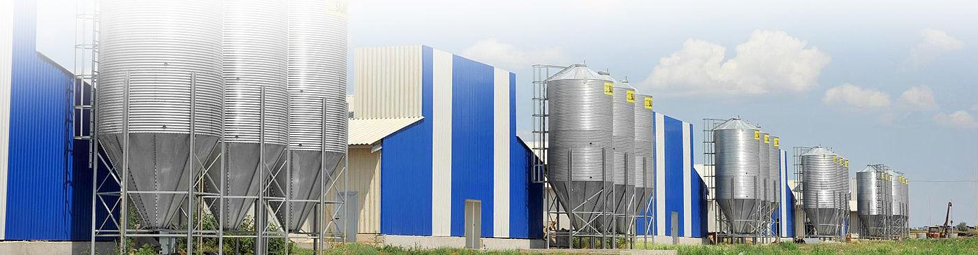 29% часткав промисловому виробництві яєць в Україні